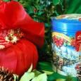 Panettoni e Pandori sono i dolci preferiti del periodo natalizio.