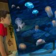 6 vasche a colonna ospitano incredibili specie di meduse in un tripudio di colori, forme e curiosità Gardaland SEA LIFE Aquarium inaugura la stagione 2011 con una novità che stupirà […]