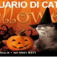 Dal 29 ottobre al 1 novembre, l'Acquario di Cattolica si traveste da brivido e diventa un set cinematografico per festeggiare la festa di Halloween. I percorsi si trasformano in labirinti […]
