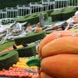 È iniziato il conto alla rovescia per uno degli eventi tra i più attesi dell'anno: sabato 8 ottobre sarà proprio Federica Pellegrini ad inaugurare la stagione di Gardaland Magic Halloween! […]